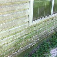 Vinyl Siding (Mold Removal - Detailed) Before - Patriot SoftWash